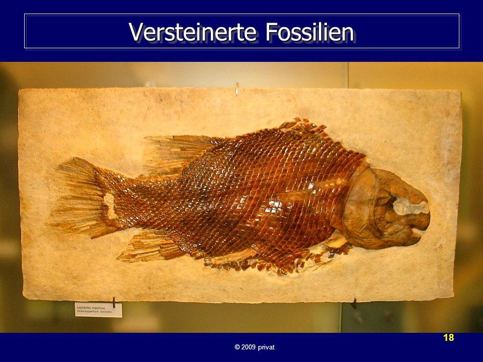 Versteinerte Fossilien