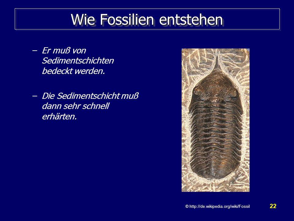 Wie Fossilien entstehen