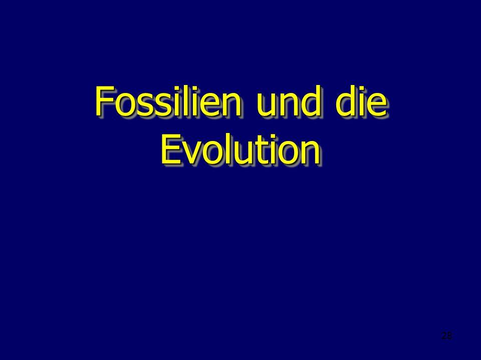 Fossilien und die Evolution