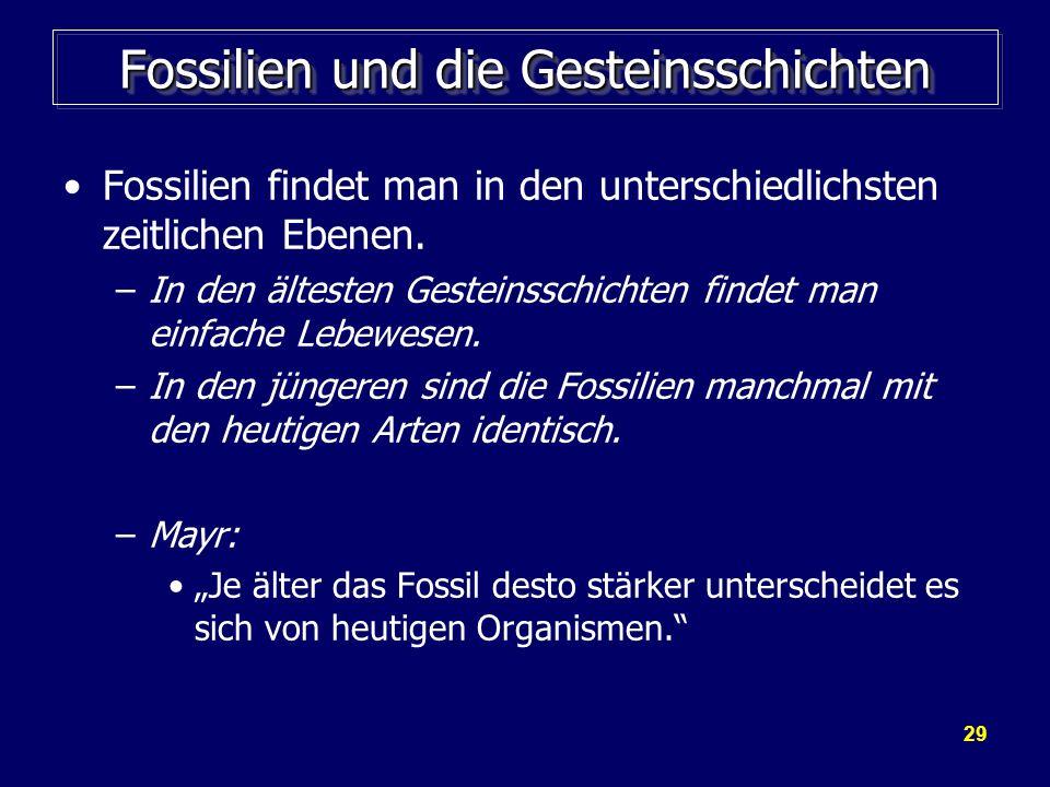 Fossilien und die Gesteinsschichten