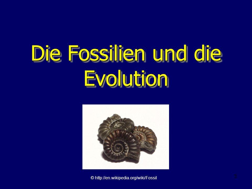 Die Fossilien und die Evolution