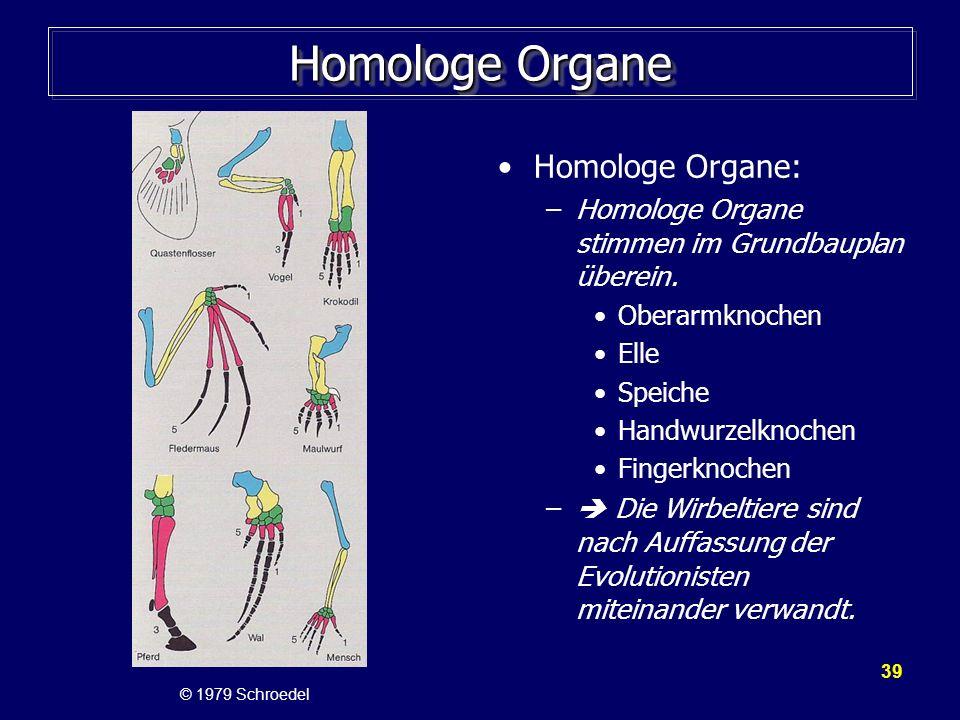 Homologe Organe Homologe Organe: