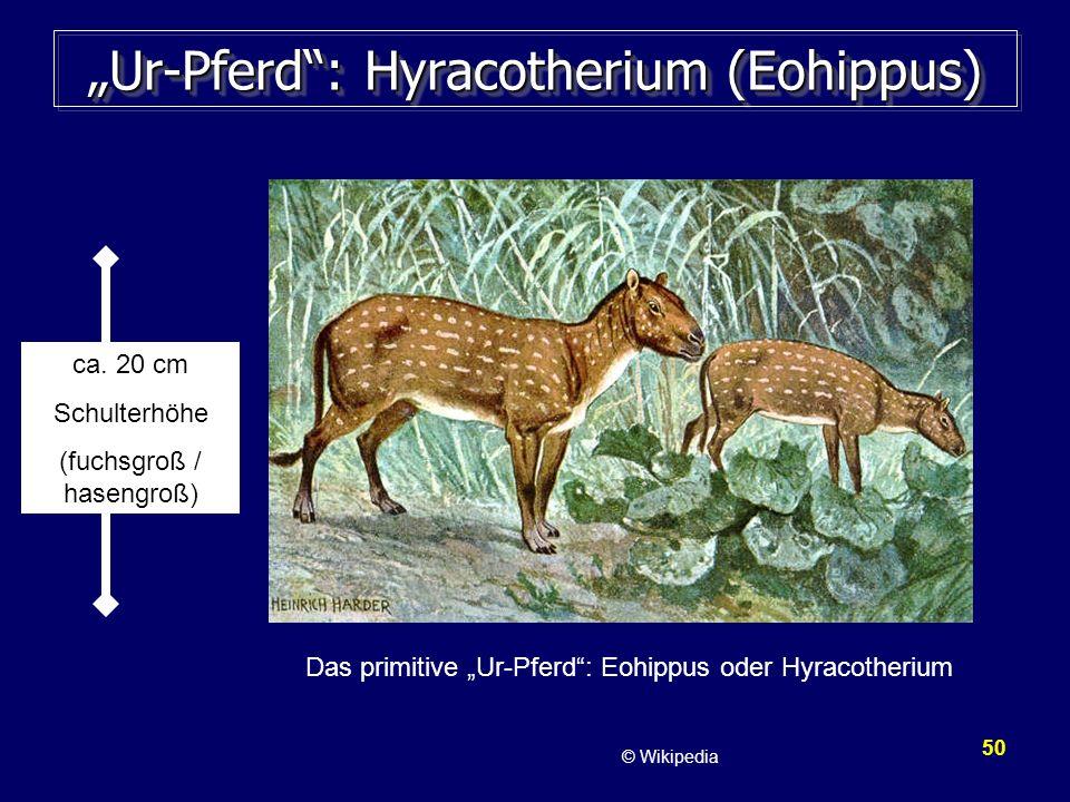 """""""Ur-Pferd : Hyracotherium (Eohippus)"""