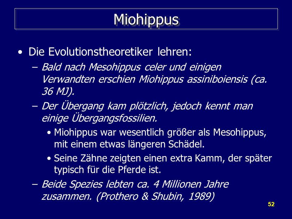 Miohippus Die Evolutionstheoretiker lehren: