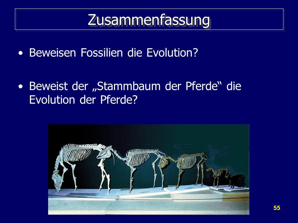 Zusammenfassung Beweisen Fossilien die Evolution