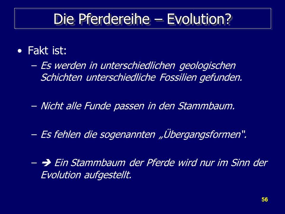 Die Pferdereihe – Evolution