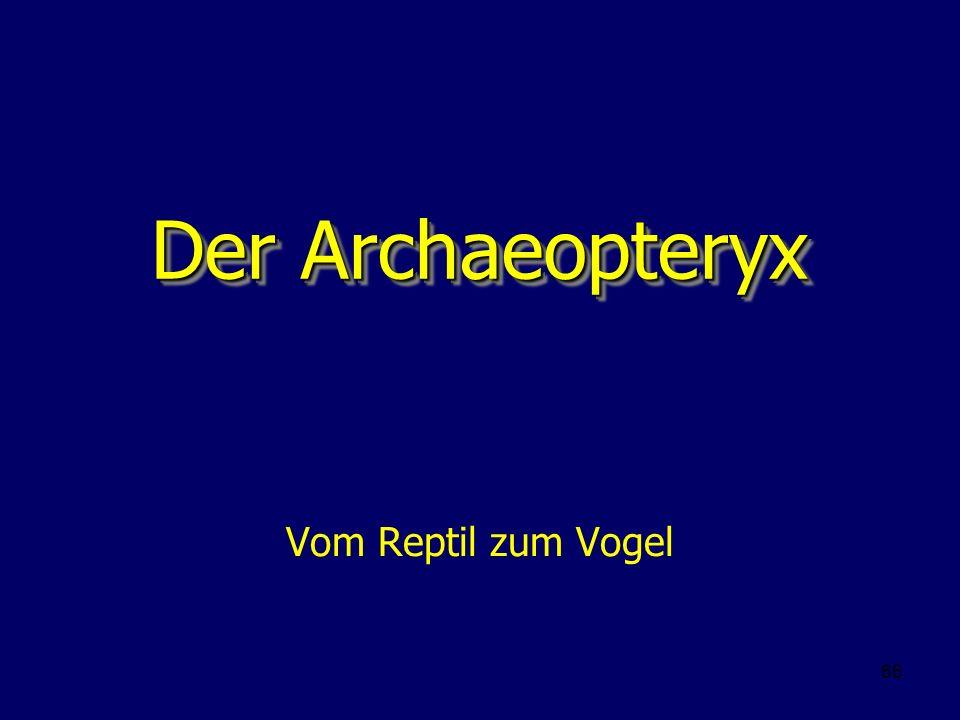 Der Archaeopteryx Vom Reptil zum Vogel