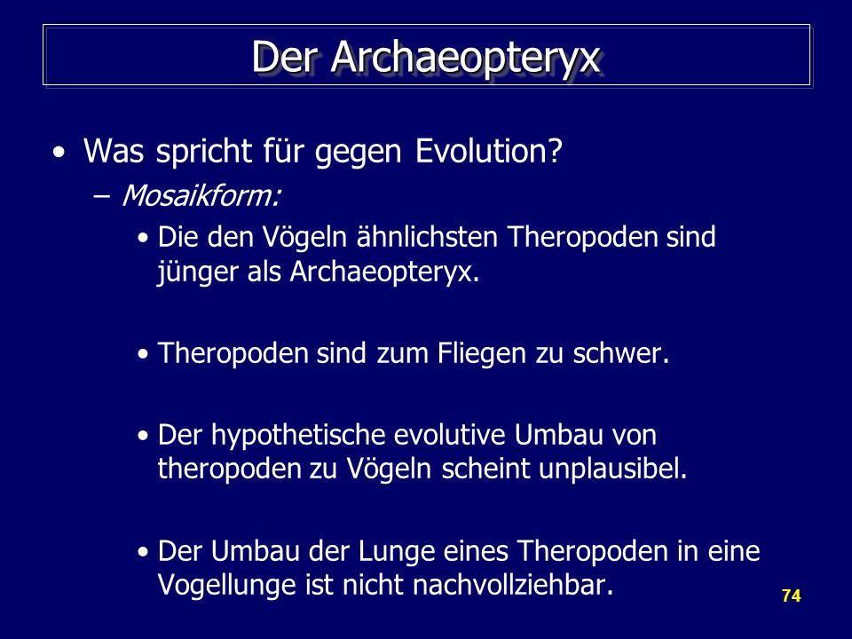 Der Archaeopteryx Was spricht für gegen Evolution Mosaikform: