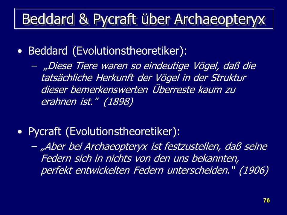 Beddard & Pycraft über Archaeopteryx