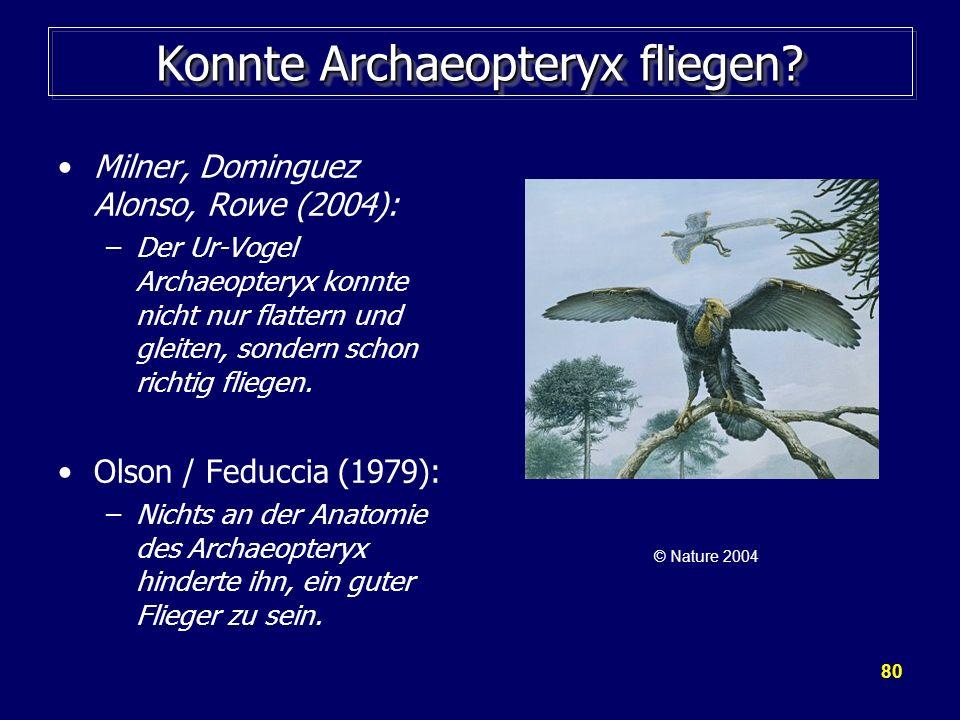 Konnte Archaeopteryx fliegen