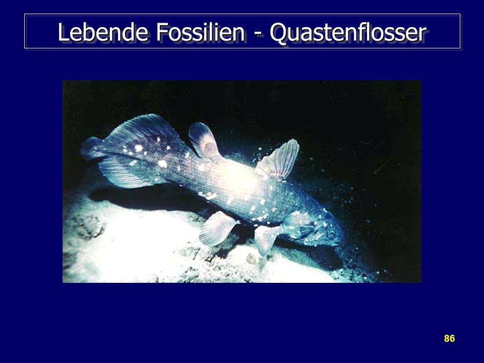 Lebende Fossilien - Quastenflosser