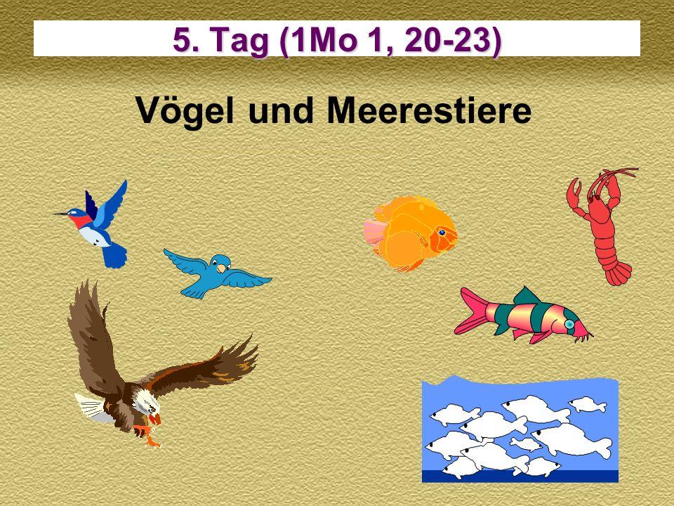 5. Tag (1Mo 1, 20-23) Vögel und Meerestiere