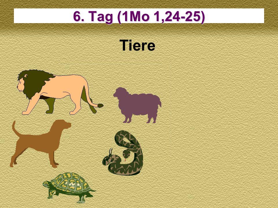 6. Tag (1Mo 1,24-25) Tiere