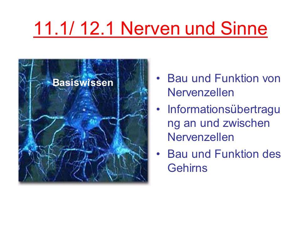 11.1/ 12.1 Nerven und Sinne Bau und Funktion von Nervenzellen