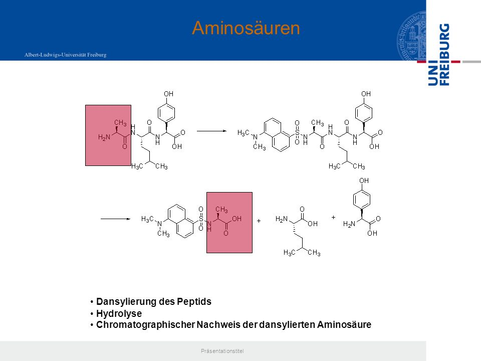 Aminosäuren Dansylierung des Peptids Hydrolyse