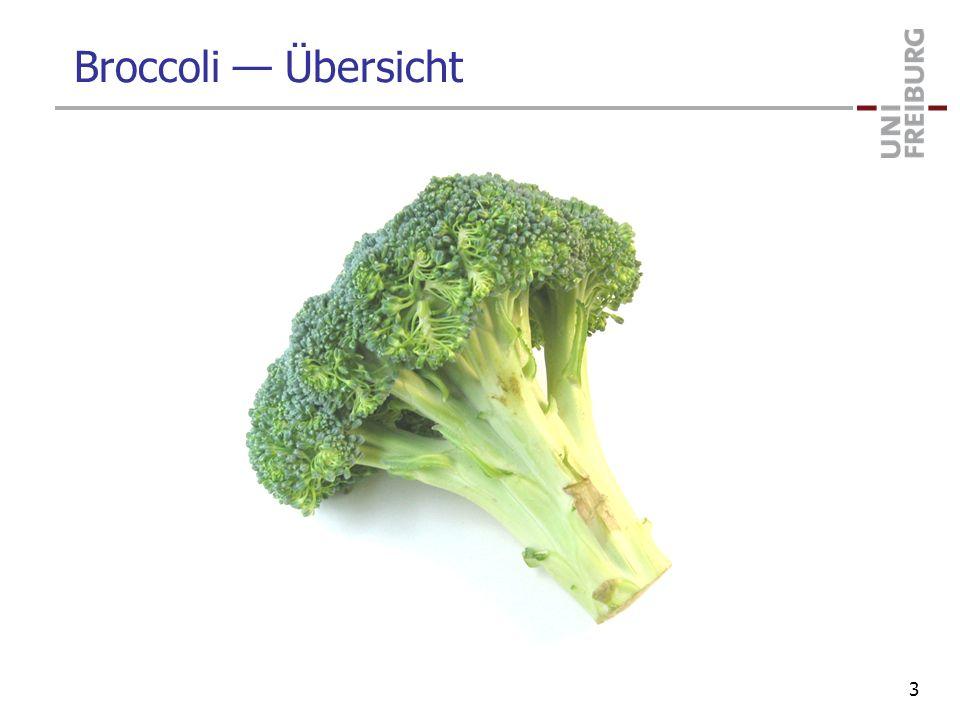 Broccoli — Übersicht