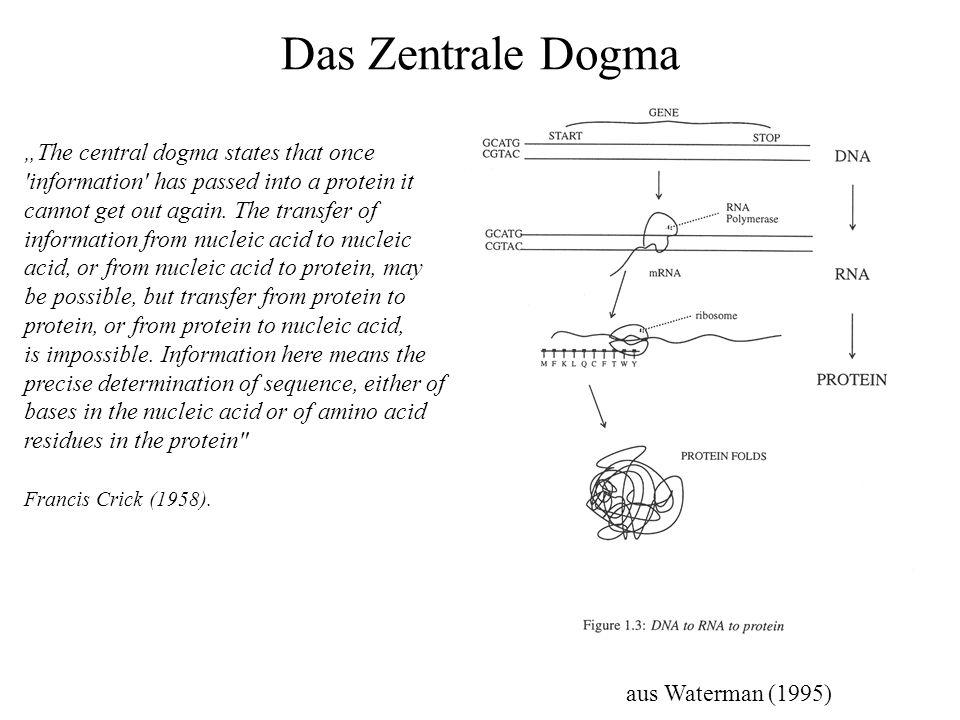 Das Zentrale Dogma