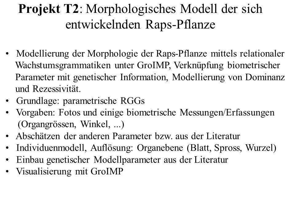 Projekt T2: Morphologisches Modell der sich entwickelnden Raps-Pflanze