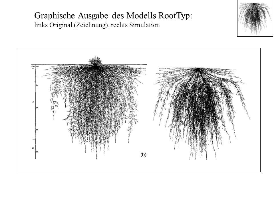Graphische Ausgabe des Modells RootTyp: