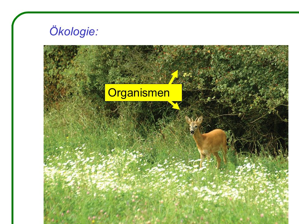 Ökologie: Organismen