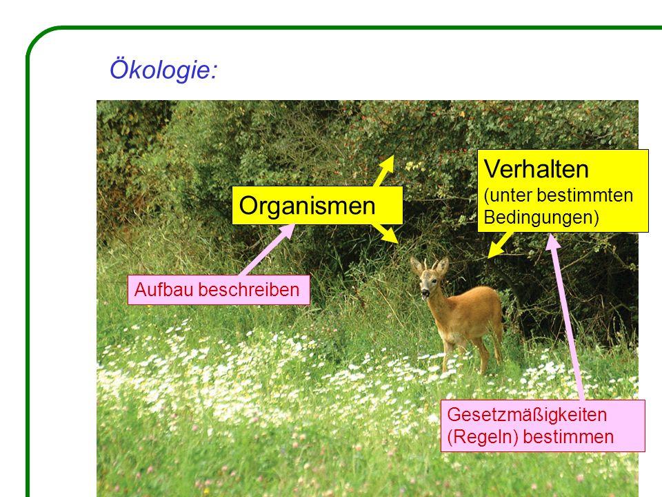 Ökologie: Verhalten Organismen (unter bestimmten Bedingungen)