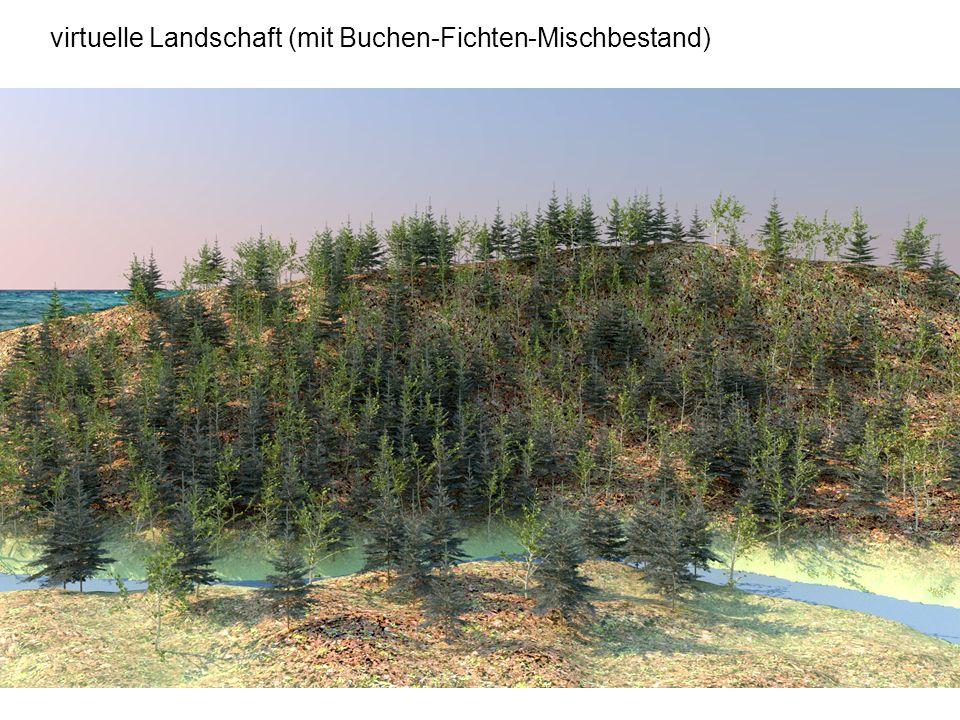 virtuelle Landschaft (mit Buchen-Fichten-Mischbestand)
