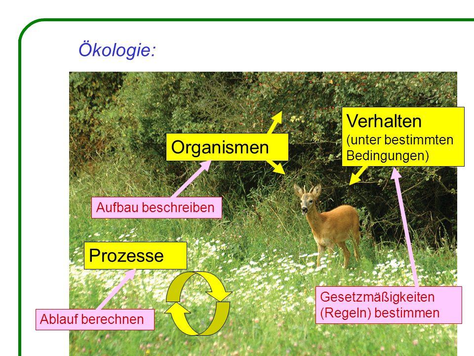 Ökologie: Verhalten Organismen Prozesse (unter bestimmten Bedingungen)