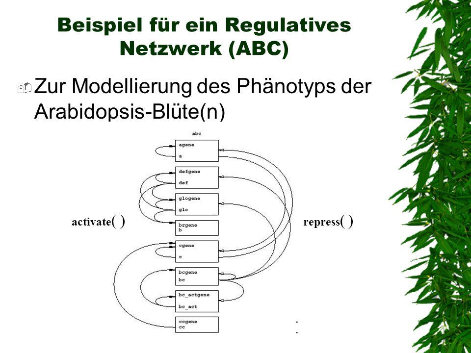 Beispiel für ein Regulatives Netzwerk (ABC)