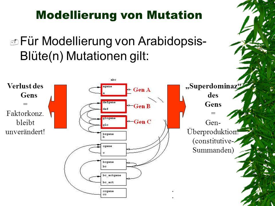 Modellierung von Mutation