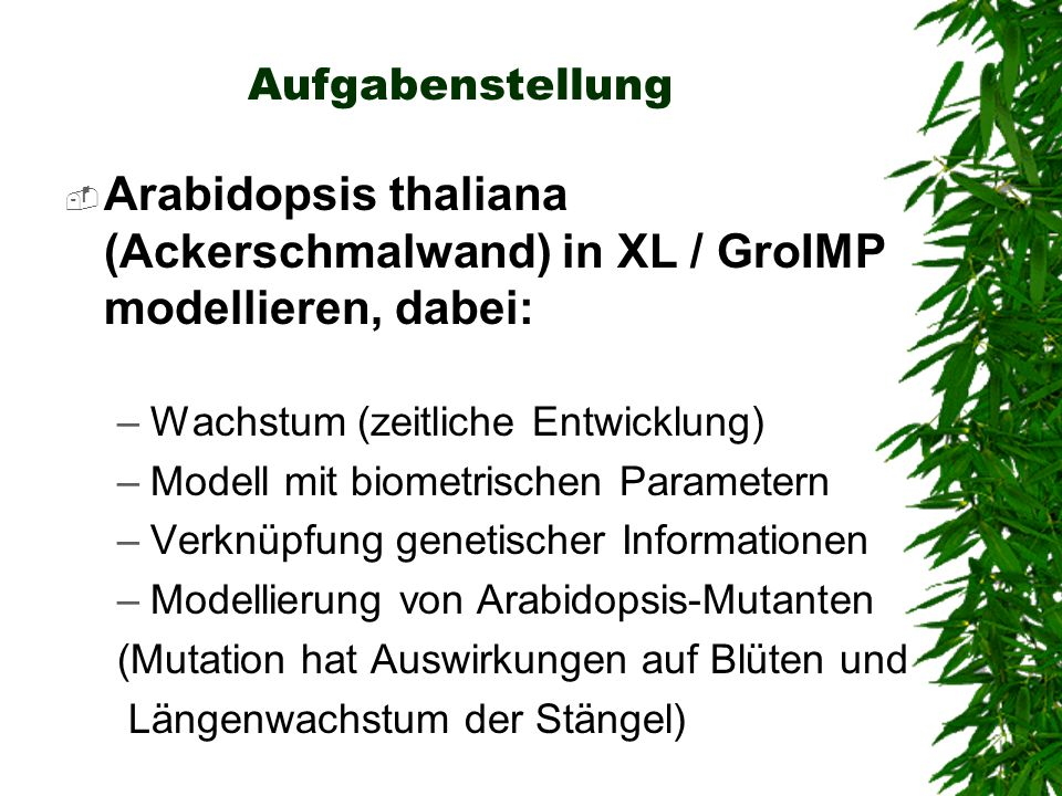 Aufgabenstellung Arabidopsis thaliana (Ackerschmalwand) in XL / GroIMP modellieren, dabei: Wachstum (zeitliche Entwicklung)