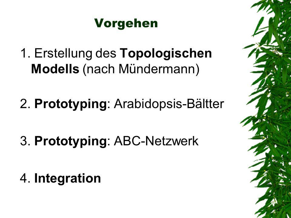 1. Erstellung des Topologischen Modells (nach Mündermann)