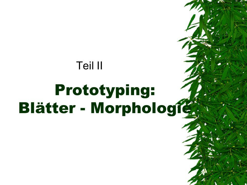 Prototyping: Blätter - Morphologie