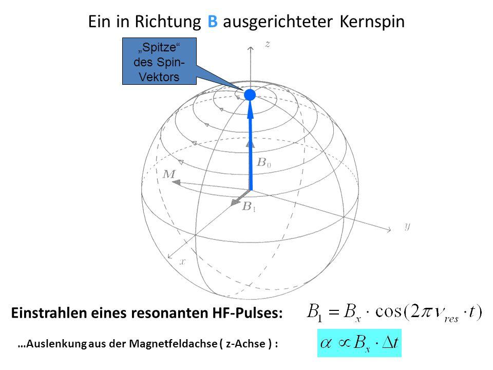 Ein in Richtung B ausgerichteter Kernspin