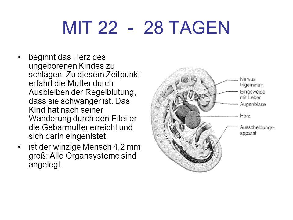 MIT 22 - 28 TAGEN