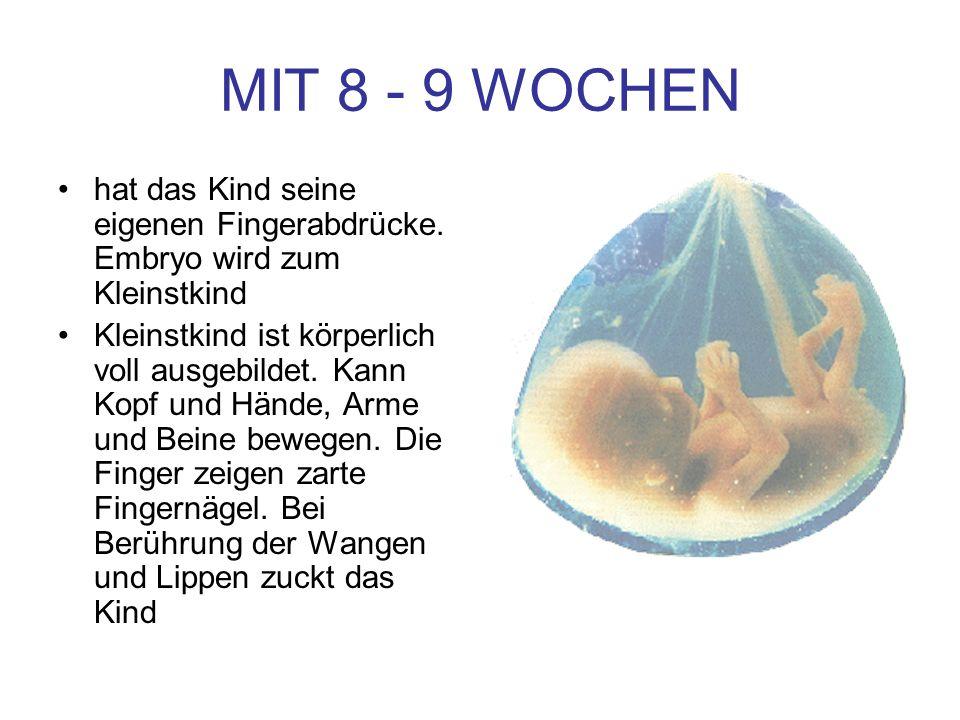 MIT 8 - 9 WOCHENhat das Kind seine eigenen Fingerabdrücke. Embryo wird zum Kleinstkind.