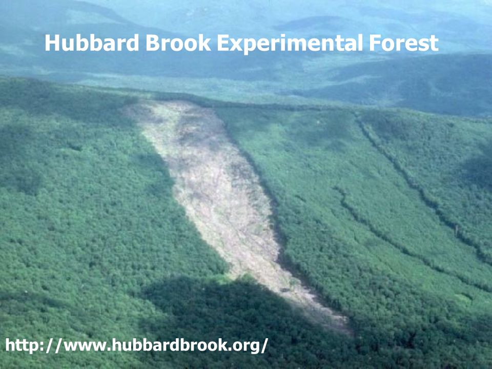 Hubbard Brook Experimental Forest