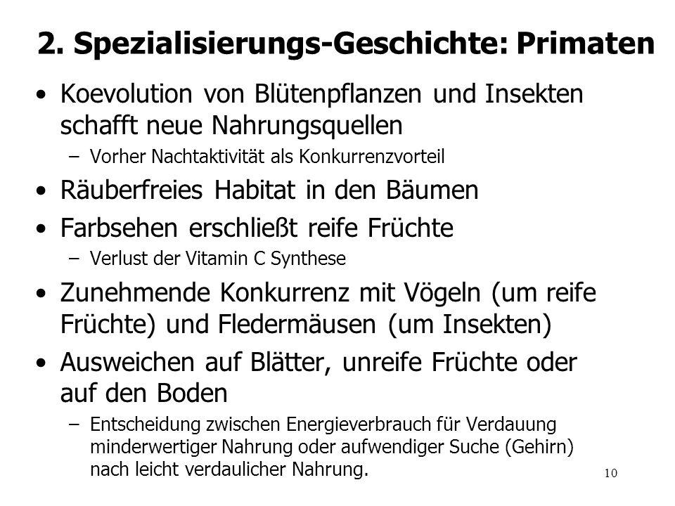2. Spezialisierungs-Geschichte: Primaten