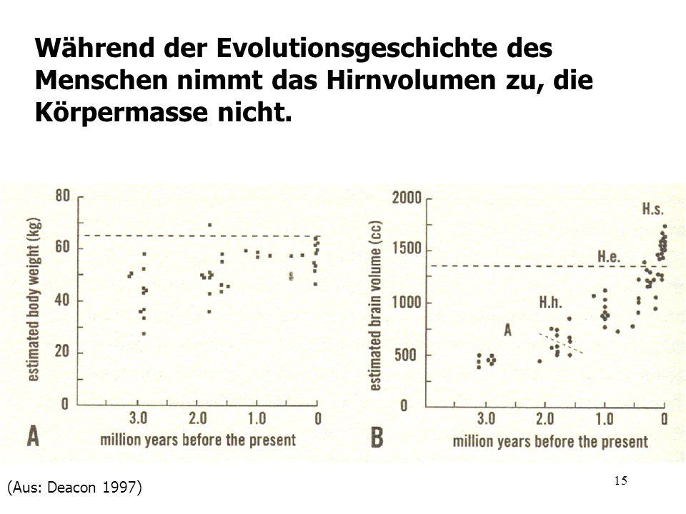 Während der Evolutionsgeschichte des Menschen nimmt das Hirnvolumen zu, die Körpermasse nicht.