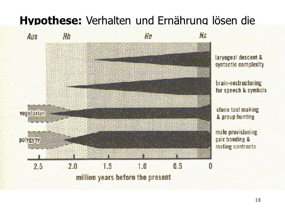 Hypothese: Verhalten und Ernährung lösen die Entwicklung des Hirnvolumens aus (Deacon 1997)
