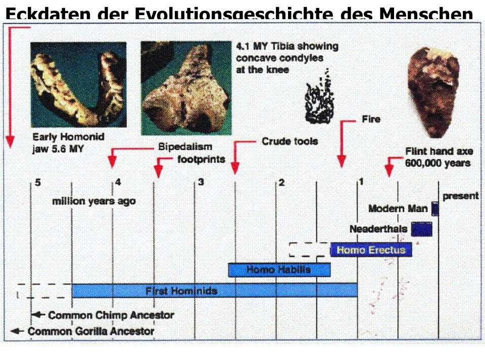 Eckdaten der Evolutionsgeschichte des Menschen
