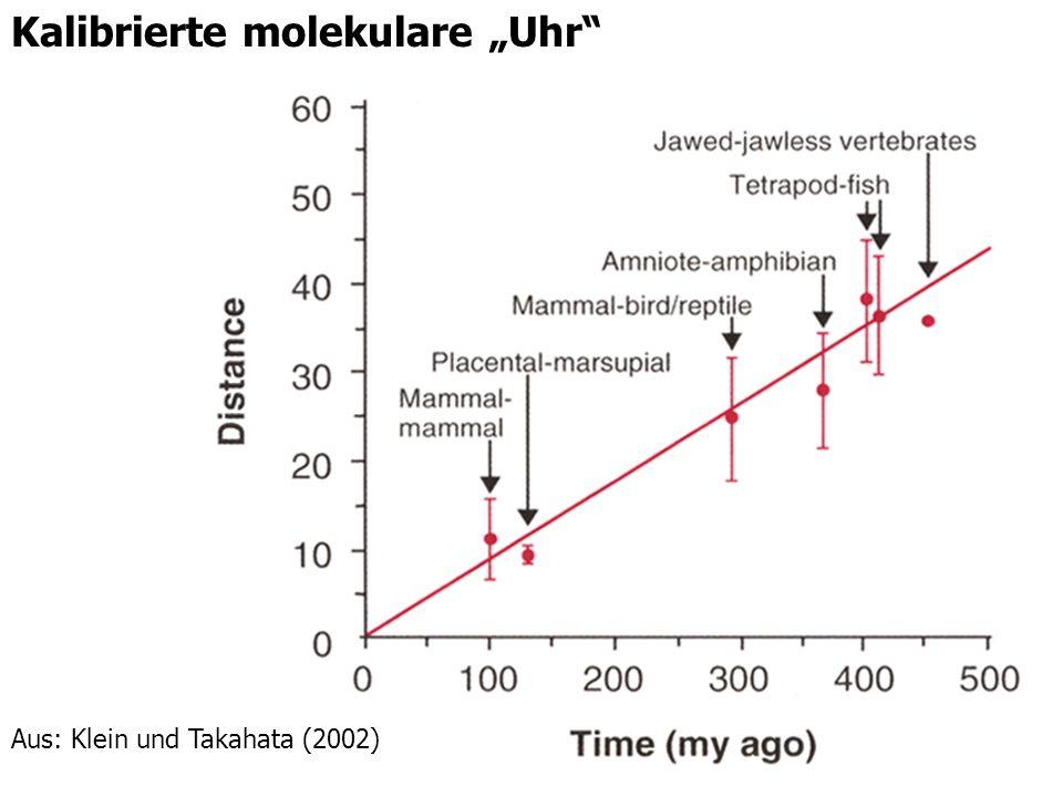 "Kalibrierte molekulare ""Uhr"