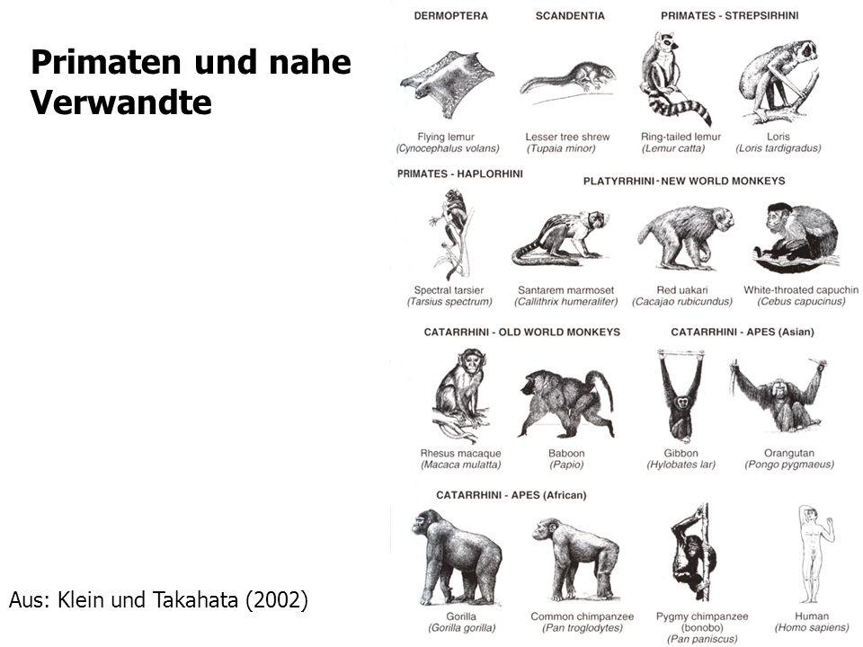 Primaten und nahe Verwandte