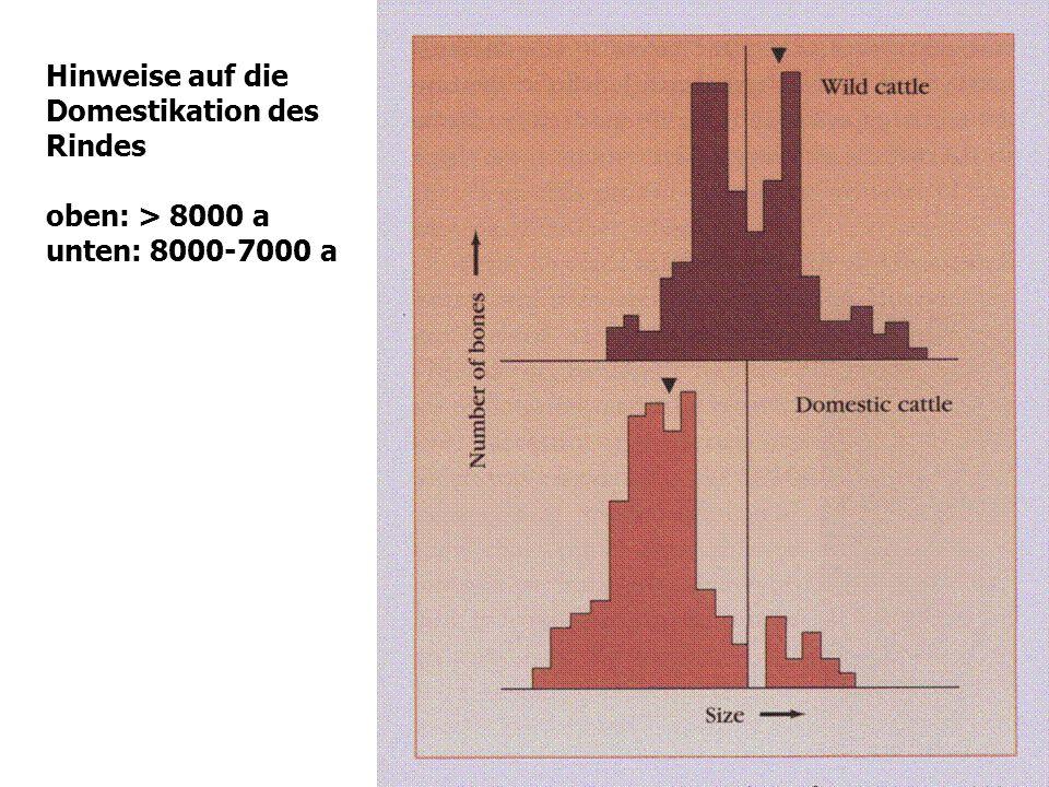 Hinweise auf die Domestikation des Rindes oben: > 8000 a unten: 8000-7000 a