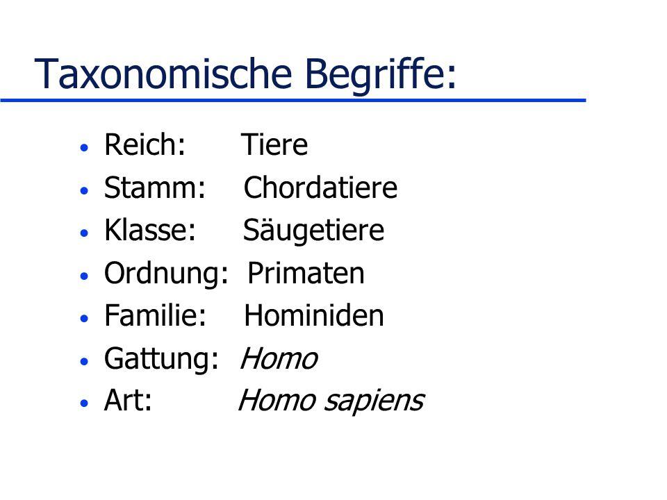 Taxonomische Begriffe: