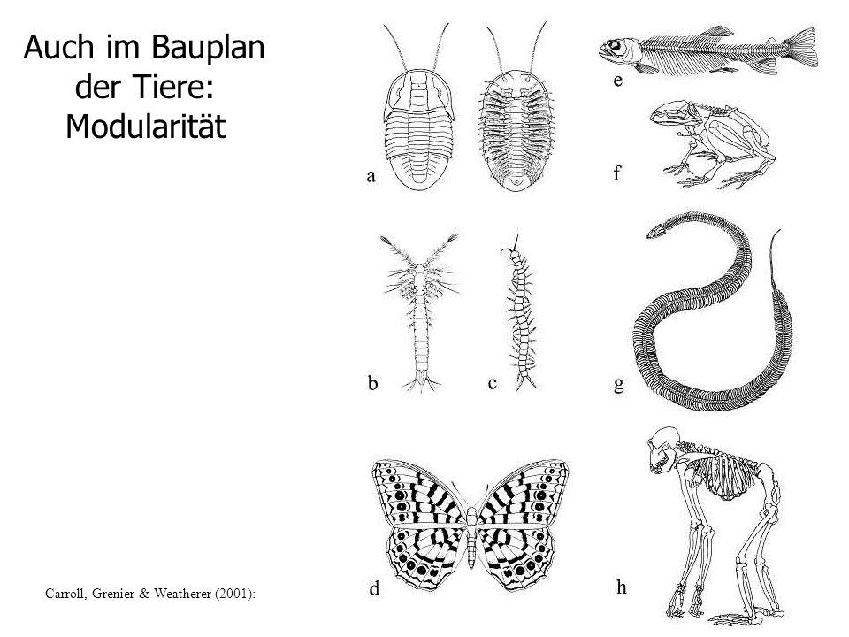 Auch im Bauplan der Tiere: Modularität
