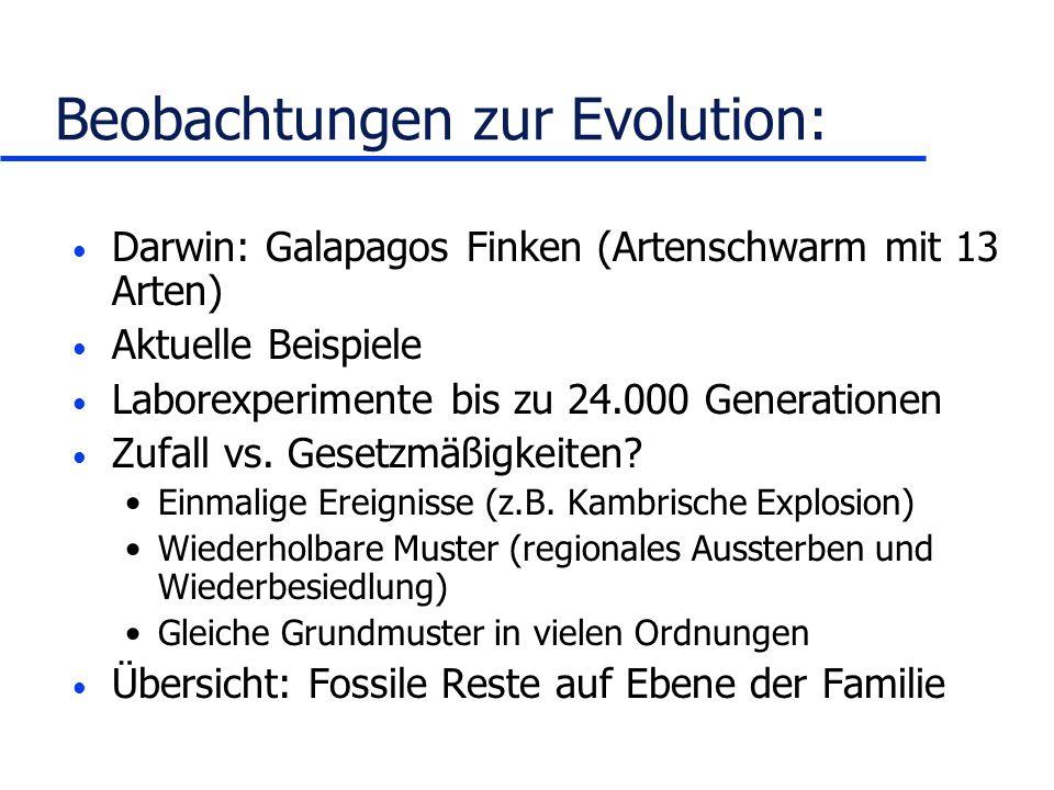 Beobachtungen zur Evolution: