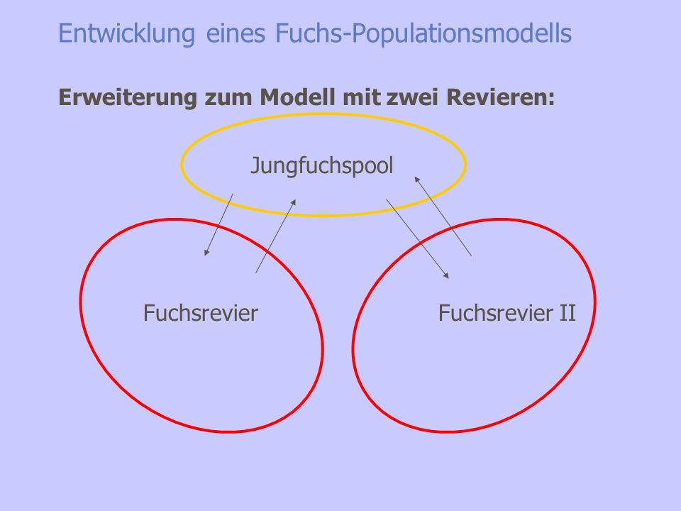 Entwicklung eines Fuchs-Populationsmodells