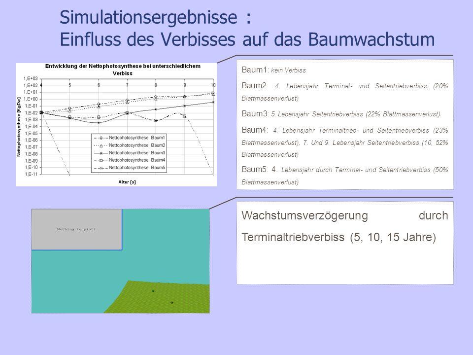 Simulationsergebnisse : Einfluss des Verbisses auf das Baumwachstum