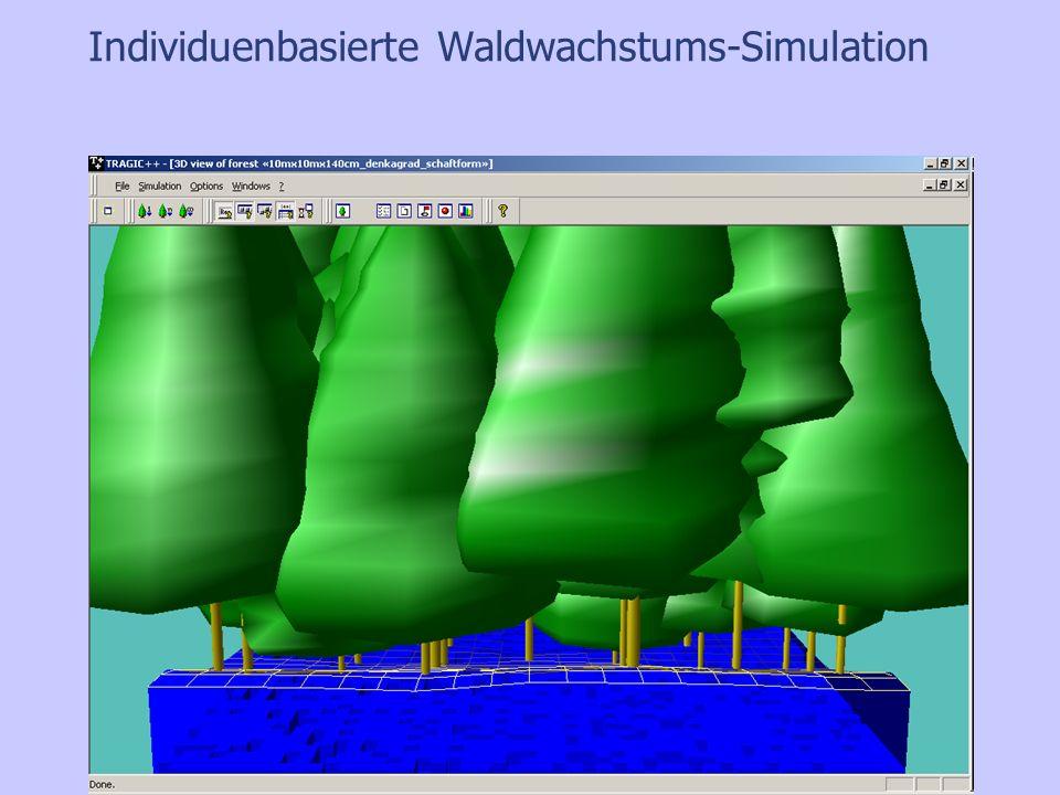 Individuenbasierte Waldwachstums-Simulation