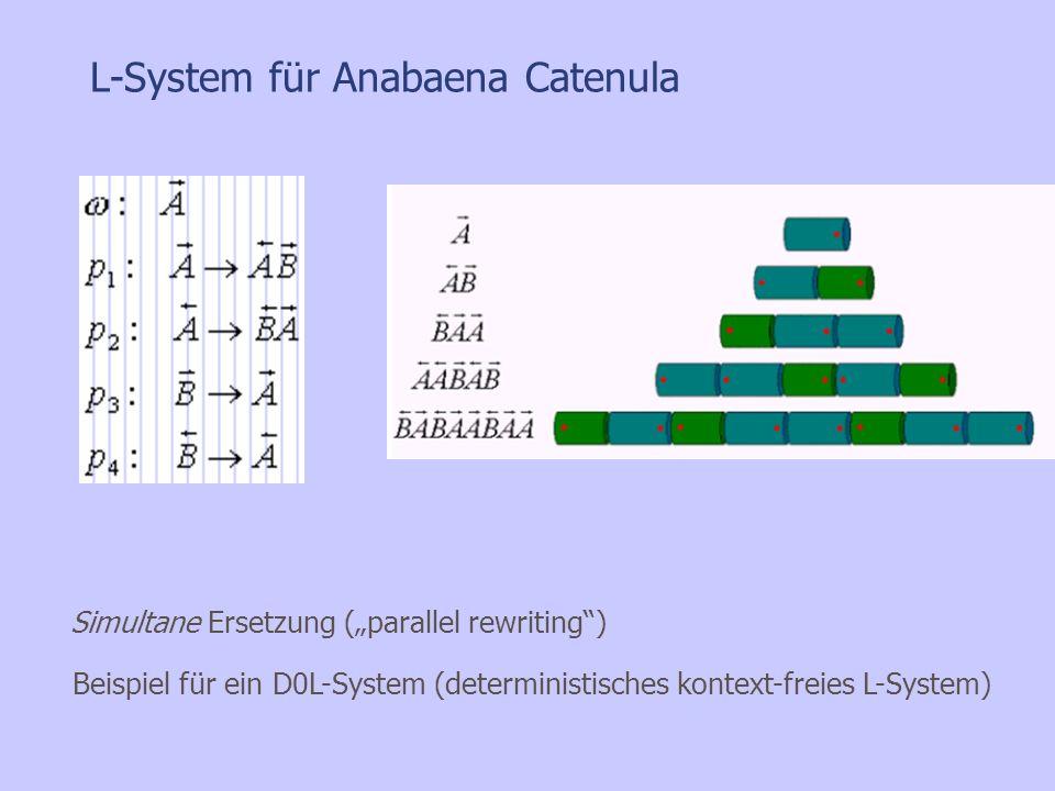 L-System für Anabaena Catenula